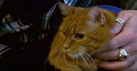 Hero Cat Saves His Human From A Fire