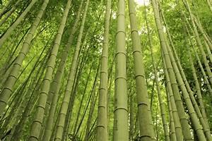 Bambus Vernichten Tipps : bambus tipps f r den winterschutz garten news garten ~ Whattoseeinmadrid.com Haus und Dekorationen