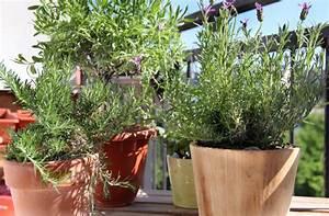 Pflege Von Lavendel : lavendel pflege auf dem balkon so gedeiht er pr chtig ~ Lizthompson.info Haus und Dekorationen