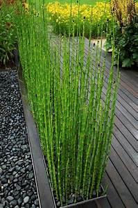 comment planter des bambous dans son jardin archzinefr With modeles de rocailles jardin 3 rosiers paysager planter et cultiver ooreka