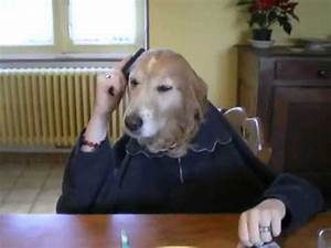 The world's most funny dog video - YouTube