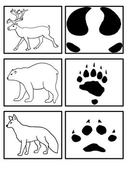arctic animals footprint matching activity by preschool 333 | original 1031526 2