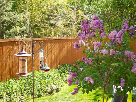 backyard bird feeders the accidental birder