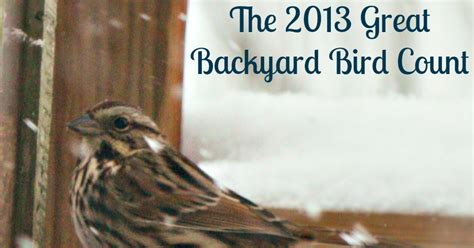 how the sun rose the great backyard bird count is coming