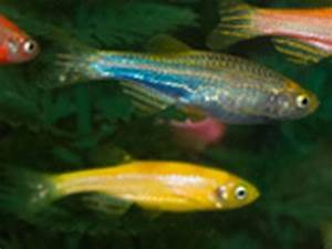 Glofish Care