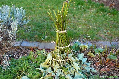 Pflanzen Winterfest Einpacken by K 252 Bel Und T 246 Pfe Mit Hausmitteln Reinigen Und Pflanzen