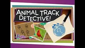 Animal Track Detective! - YouTube