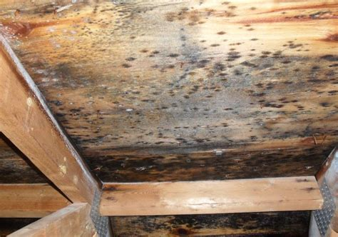 mold grow  canadas restoration services