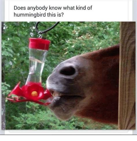 What Is A Meme - does anybody know what kind of hummingbird this is doe meme on sizzle