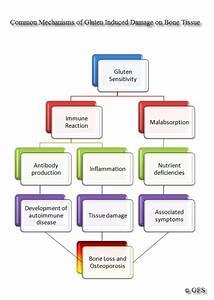 Autoimmunity  Gluten   U0026 Osteoporosis