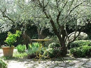Les Plus Beaux Arbres Pour Le Jardin : arbre de jardin liste ooreka ~ Premium-room.com Idées de Décoration