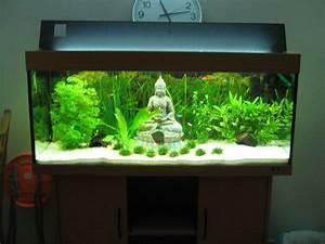 Deco Aquarium Zen : 20l pour beta ~ Melissatoandfro.com Idées de Décoration
