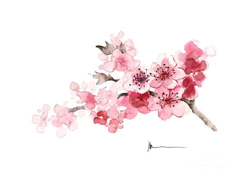 Cherry blossom branch watercolor art print painting