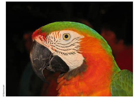 Photo perroquet - img 8384