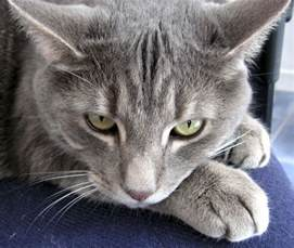 gray cats unask poems and photographs