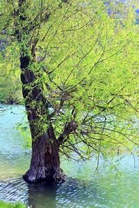 Baum Am Wasser : wundersch nen see und fr hling baum im stockfoto ~ A.2002-acura-tl-radio.info Haus und Dekorationen