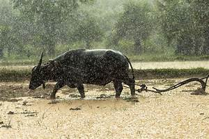 Floods' impact on agriculture minimal, says Piñol | Nation ...