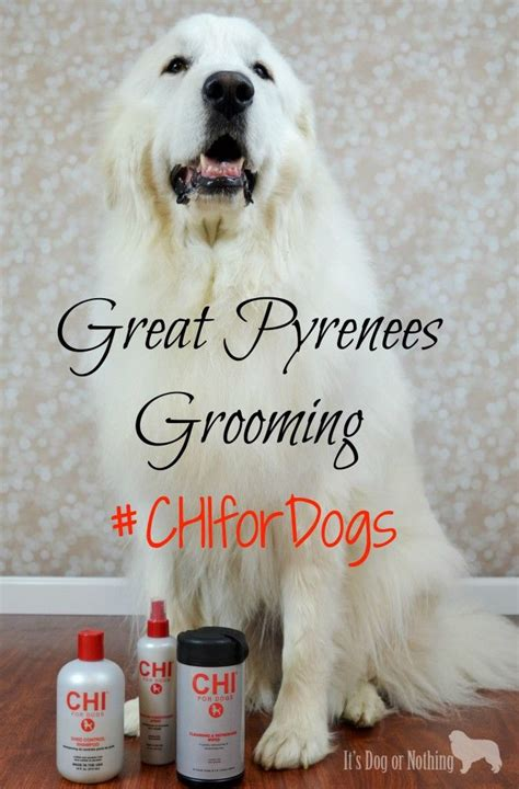 Great Pyrenees Shedding In Fall by 25 Best Ideas About Great Pyrenees On