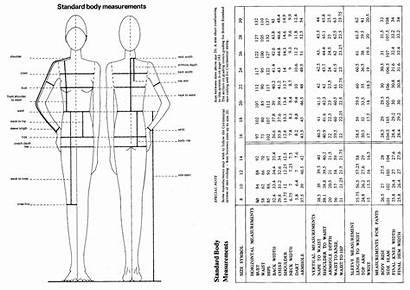 Pattern Cutting Measurements Chart Standard Sewing Basic
