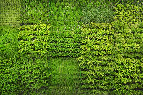 Living Moss Shower Mat by 50 Awesome Vertical Garden Ideas Photos