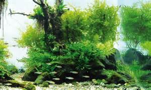 Le piante nell acquario d acqua dolce