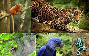Amazon Rainforest Animals Collage | www.pixshark.com ...