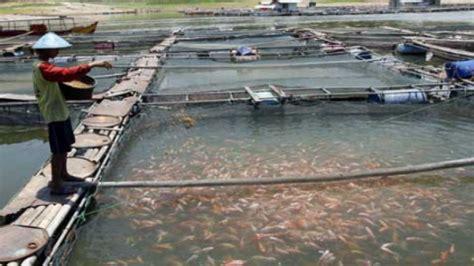 pemerintah balikpapan galakkan budidaya ikan air tawar