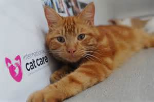 all about cats about us international cat care