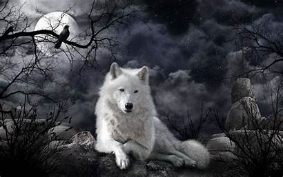 Wolf Desktop Wallpapers Background Backgrounds Wallpaperaccess Night