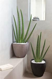La plante verte d'intérieur