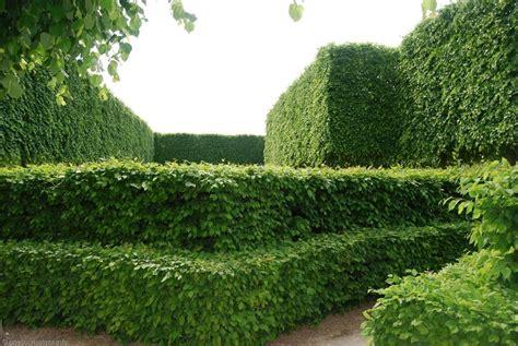 jardin de versailles gratuit 4 chateau versailles