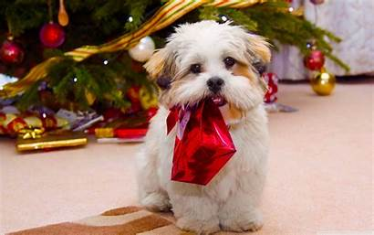 Christmas Dog Wallpapers Dogs Puppy Desktop Pets