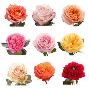 wedding flower packages choose your colors garden roses garden roses roses flower muse