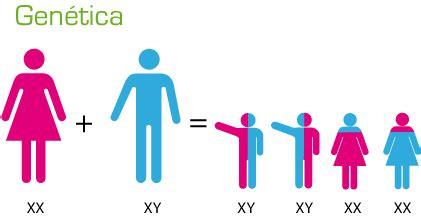 test genetica test de 233 tica nivel b 225 sico test y cuestionarios