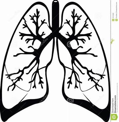 Lungs Lung Clipart Drawing Illustration Clipground Dreamstime
