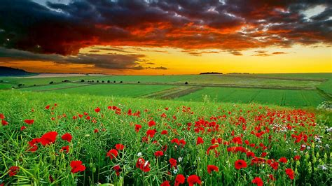 Full Hd Nature Wallpapers 1080p Desktop In Green Landscape