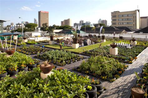 urban gardening project greens johannesburg rooftops