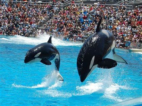 Best Seaworld San Diego Places Stay
