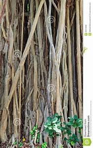 Achat Tronc Arbre Decoratif : tronc d 39 un vieil arbre photos libres de droits image ~ Zukunftsfamilie.com Idées de Décoration