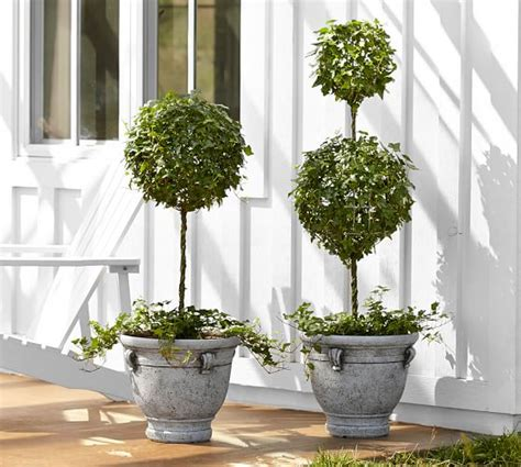 Live Ivy Classic Topiary  Pottery Barn
