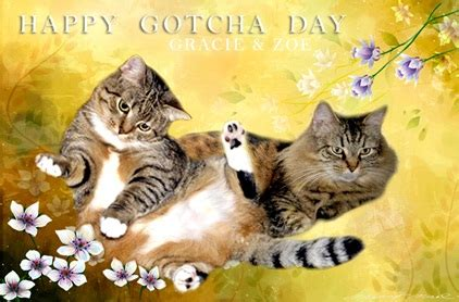 adorable gotcha day greeting pictures