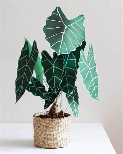 Paper Plants Plant Corrie Beth Hogg Craft