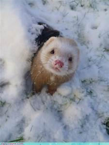 Pictures of Cute Animals to Get You Through Finals | Chegg ...