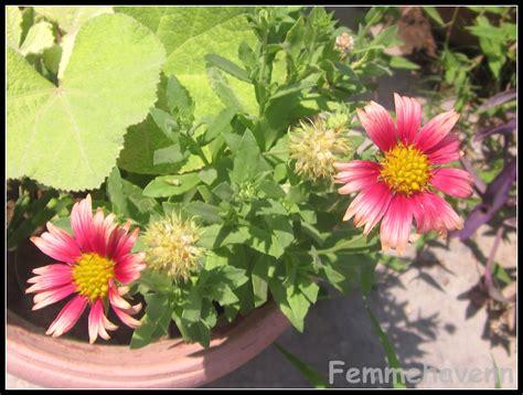 summer flowering plants summer flowers and plants home garden glimpses femmehavenn
