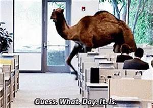 Popular Hump Day GIF - Hump Day - Discover & Share GIFs