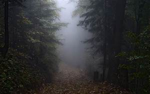 Landscape, Nature, Mist, Morning, Fall, Path, Forest, Hill