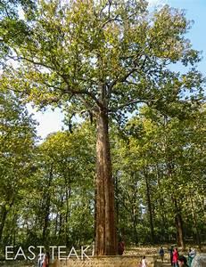 What is Teak Wood? - East Teak