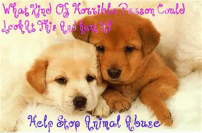Abuse Animal Stop Cruelty Against Animals Dogs
