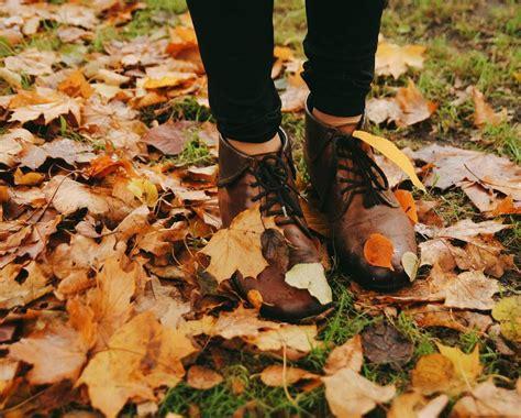 falling golden leaves automne pinterest golden