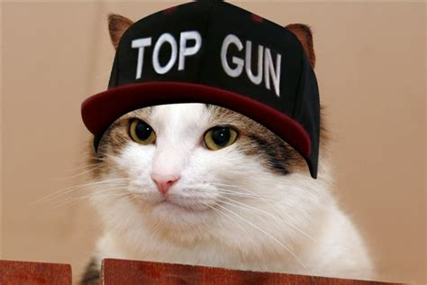 Top Gun Hat Meme - image 583631 top gun hat know your meme